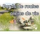 biodiversité des bords de routes